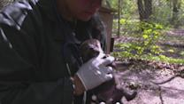 Endangered Mexican Gray Wolf Pup Born at Conservation Center