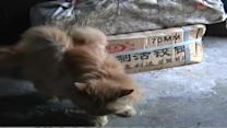 Stray cat grows furry 'wings' in China