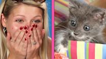 Cat Lovers Get Surprised By A Box Of Tiny Kittens And Lose Their Minds