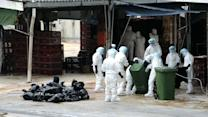 Bird flu will become endemic unless action taken quickly: expert