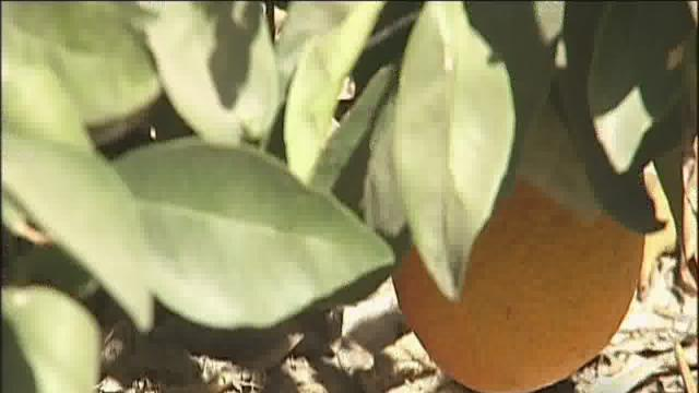 Senator Vidak discussed citrus bug