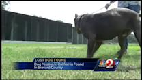 Dog from California found in Brevard County
