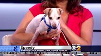 Furry Friend Finder: Speedy And Lara