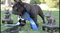 Champion Bulldogs Stolen From Home
