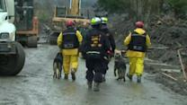 Dog teams join mudslide search