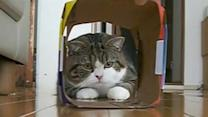 Advertisers cashing in on online cat videos