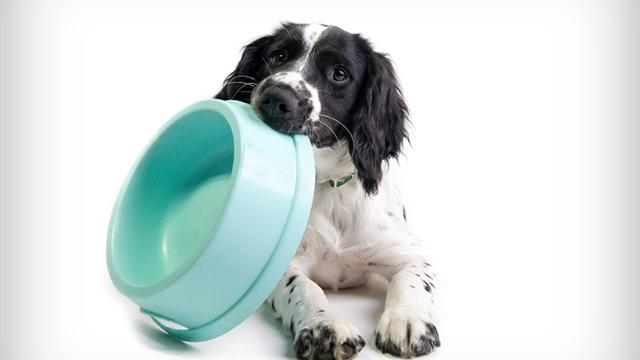 Gourmet food for your dog