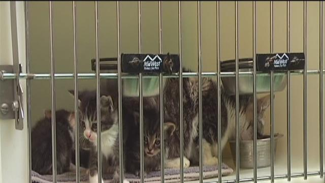 KCAC moving forward with funds for a new shelter