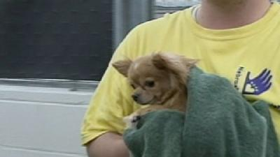 More Than 60 Dogs Rescued From Falls City Home