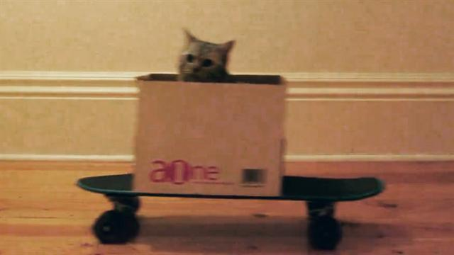 Cat boarding - the web's newest craze?