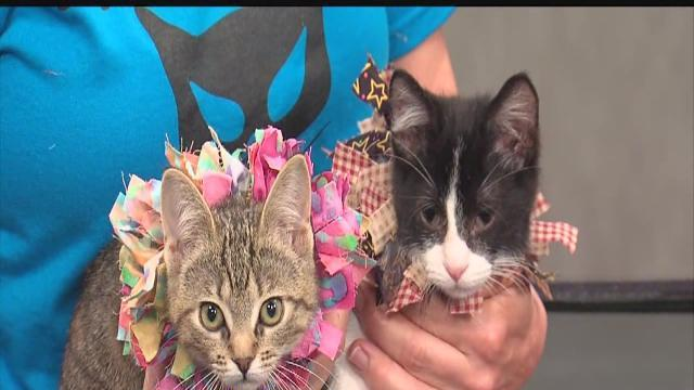 ABC Action News: Weekend Edition: Rescues in Action Kitties