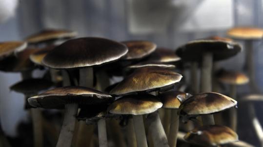 Should magic mushrooms be legal?