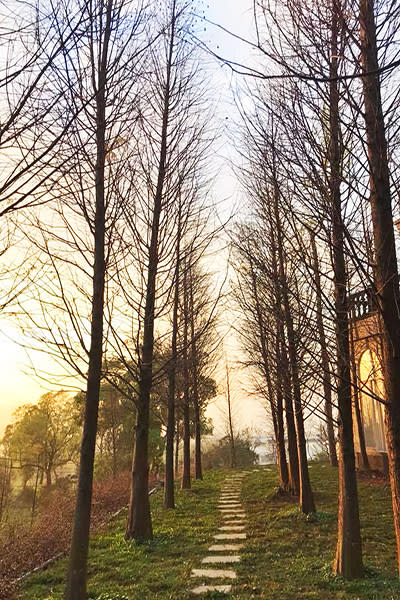 園區也有北歐風的森林景觀