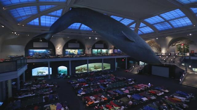 Real-Life Night at the Museum