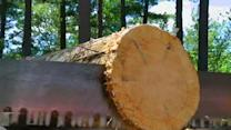 Mastering Ax Throw, Sawing in Lumberjack Class