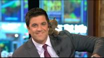 'GMA' Bids Farewell to Josh Elliott