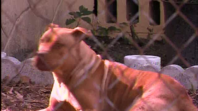 Pit Bull Day celebrates troubled breed