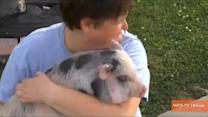 Family Says Pet Pig Rescued Them From House Fire