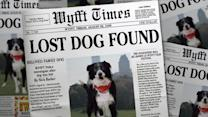 Would You Fall for That? Lost Dog and 'Inattentional Blindness'