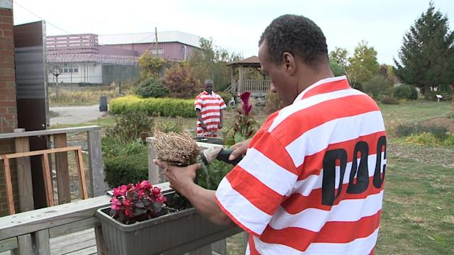 Prisoners Show Green Thumbs On Rikers Island