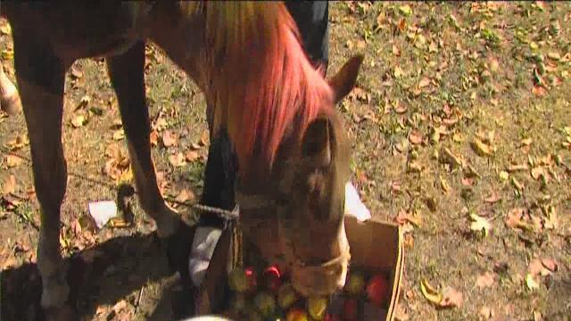 Animal activists angry over pet horse in Detroit