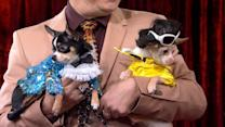 Owners Spend Thousands on High-End Fashion for Fido