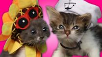 Kittens Trying To Wear Hats And Failing Is Insanely Cute