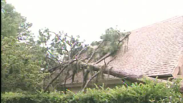 Determining fault after a tree falls on neighbor's building