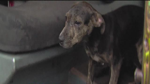 Detroit Fire Department saves family, dog from burning home