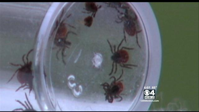 Experts Predict Bumper Crop Of Ticks This Year