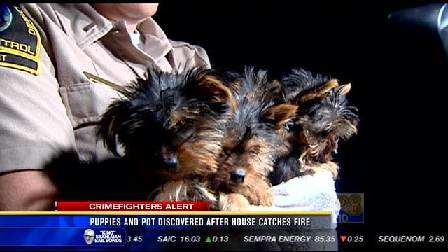 Puppies and pot discovered after house catches fire