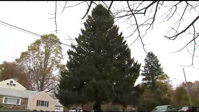 Shelton Tree To Star At Rockefeller Center