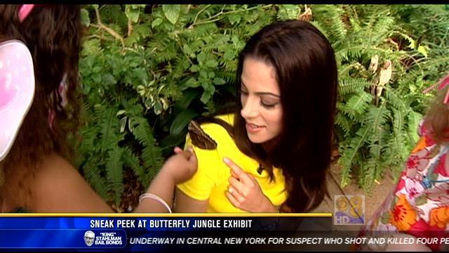 Sneak peek at Butterfly Jungle exhibit at Safari Park