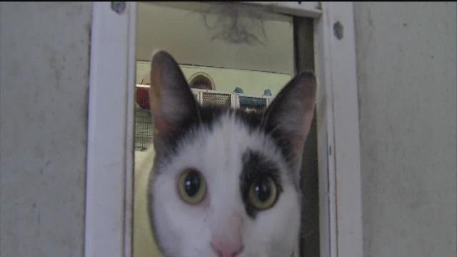 Local animal shelters warns donations may not be making it to them