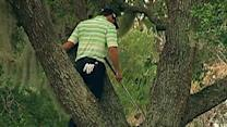 Raw: Golfer Climbs Tree, Hits Ball Off Limb