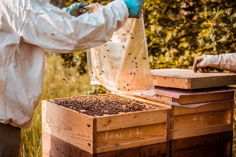 150萬隻蜜蜂約能產出400公斤蜂蜜,去年在德國萊比錫服務中心商店上架,短短幾天就銷售一空