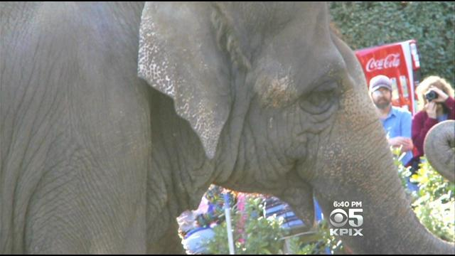 Animal Activists Protest After Euthanization Of Elephant At Six Flags Vallejo