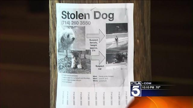 Tustin Family Seeks Public`s Help in Locating Stolen Dog