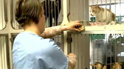 Veterinarians: Cold Weather Poses Threats To Pets