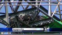 Oncor Crews Move Bald Eagle Nest From Power Line