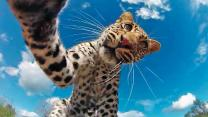 Caught On Camera: Leopard Runs Off With GoPro