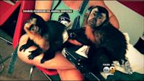 Monkey Impounded After Reportedly Biting Woman Outside Beaumont Restaurant