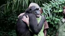 Chimp Stops to Thank Jane Goodall Before Being Released into the Wild