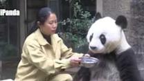 Giant Panda Celebrates 35th Birthday