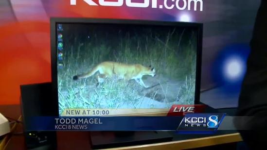 Game camera catches mountain lion