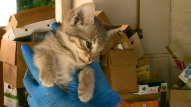 Kitten Survives 2-Day Trip in Car's Engine